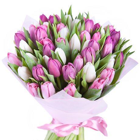 Mix białych i fioletowych tulipanów